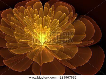 Wide Shining Flower   Background - Fractal Art -   3D image