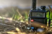 Walkie-talkie in the grass with the inscription on the screen - Forest. poster
