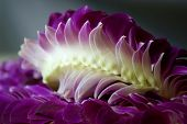 hawaiian lei made with purple and white orchid flowers poster