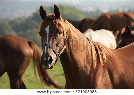 Close up of a horse. Nature landscape. Nature background. Horse in Natural environment in sunshine. Horses in autumn meadow. Horses in pastrure. Mammal at dusk. Stallion at dawn. Horses in Outdoors at sunrise. Horses at sunset. Animal and sun rays.