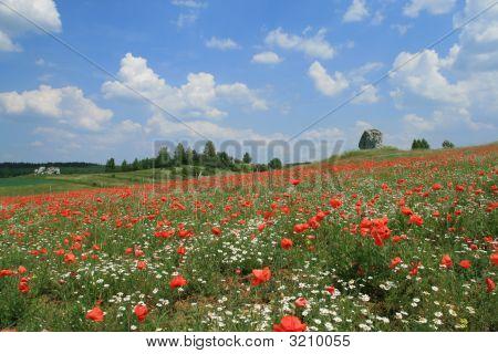 Poppyseed and chamomile fields. Early summer in Jura Krakowsko-Czestochowska Poland. poster