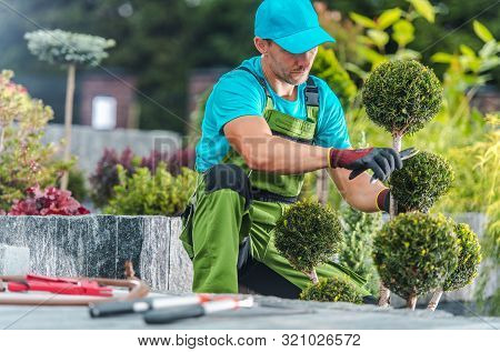 Caucasian Professional Gardener Trimming Decorative Trees In A Garden. Landscaping Industry.
