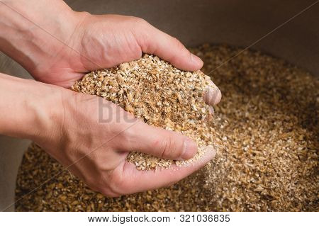 Male Hands From Which Ground Malt Pours Out. Good Attitude To Craft. Craft Beer Brewing From Grain B
