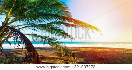 Palm Tree In Grande Anse Beach In Guadeloupe, French West Indies. Lesser Antilles, Caribbean Sea