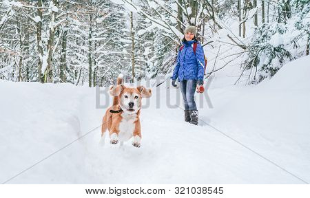 Active Beagle Dog Running In Deep Snow. Its Female Owner Lookking And Smiling. Winter Walks With Pet