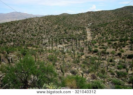 Rincon Mountains In The Sonora Desert In Central Arizona Usa