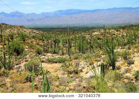 Catalina Mountains In The Sonora Desert In Central Arizona Usa