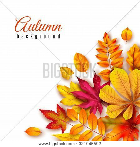 Autumn Leaves Background. Autumnal Border With Isolated Yellow Maple, Oak And Rowan Foliage. Fall Th