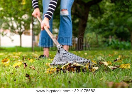 Raking Fallen Leaves In Garden. Gardener Woman Cleaning Lawn From Leaves In Backyard. Woman Standing