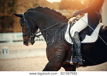 Equestrian Sport. Portrait Sports Brown Stallion In The Bridle.the Leg Of The Rider In The Stirrup,