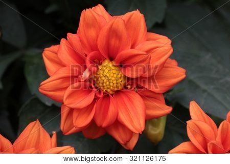 Beautiful flowers of in the park on dark background