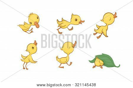 Vector Set Of Cute Funny Yellow Cartoon Ducklings On A White Background
