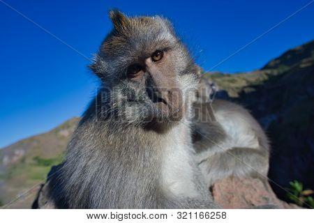 Natur Affe Nahaufnahme  Himmel Blau Auge Tiere