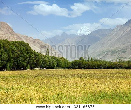 Cereal Field In Wakhan Valley, Hindukush Mountains, Gorno-badakhshan Region, Tajikistan And Afghanis