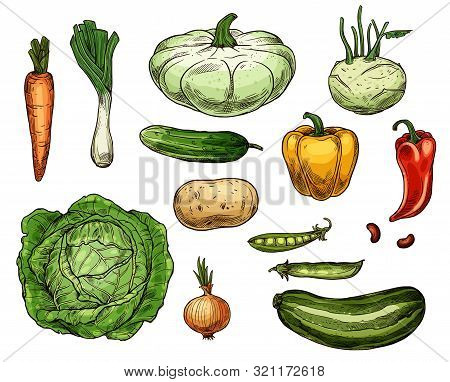 Vegetable Sketches, Isolated Food. Vector Farm Carrot And Green Onion, Cabbage And Potato, Pea And R