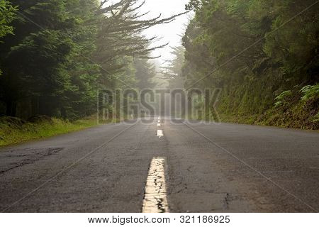 The Road Of The Life In A Beautiful Forest