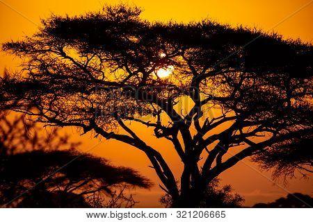 African Sunset With Acacia Tree In Masai Mara, Kenya. Savannah Background In Africa. Typical Landsca