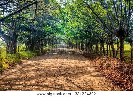 Dirt road through Corcovado National Park in Costa Rica