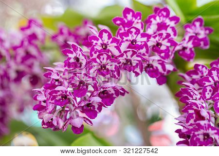 Orchid Nature Background. Nature Background Of Orchid. Orchid Plant Nature Background. Close Up Back