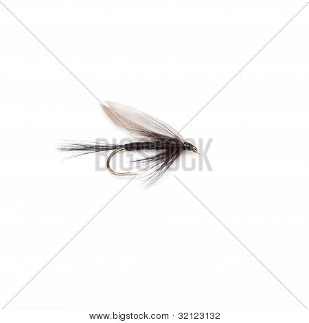 Black Knat trout fly