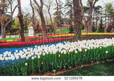 Tulip Festival In The Garden  Emirgan Park Istanbul ,turkey