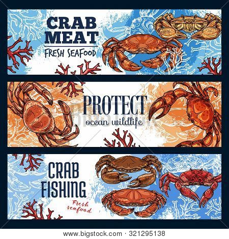 Crab sea animal, seafood and endangered species. Vector marine shellfish, ocean crustacean with pincers and claws, mediterranean cuisine. Protect extincting lobsters and fishing on crawfish advert poster