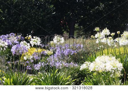 This Is An Images Of Flowers Growing In Carmel Valley, California.