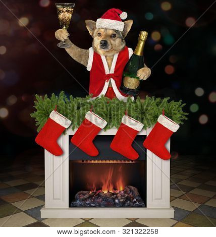 The Dog In A Santa Claus Outfit With A Bottle Of Champagne Near The Fireplace With Christmas Stockin