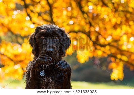 Black mutt dog posing in autumn park. Lots of copy space.
