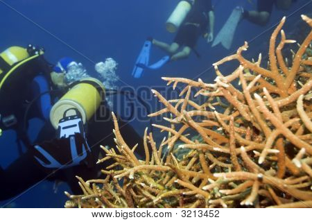 Coral And Group Of Divers