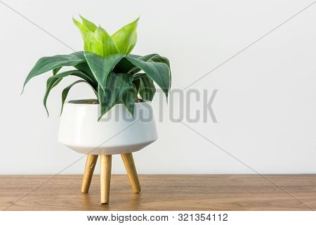 Home Interior Decoration Spathiphyllum House Plant In White Ceramic Pot On Wooden Media Stand White