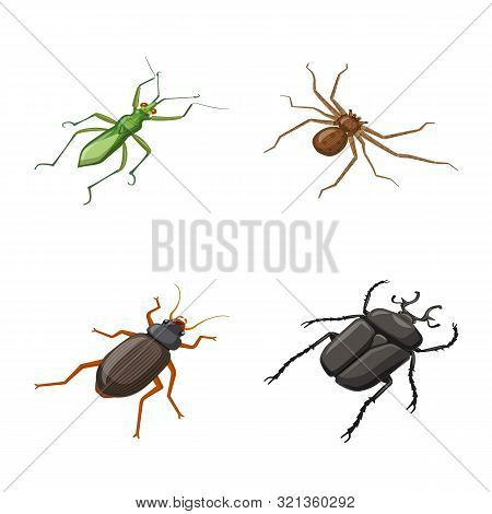 Vector Design Of Insect And Fly Symbol. Set Of Insect And Entomology Vector Icon For Stock.