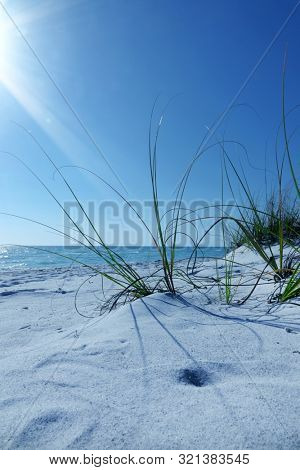 Close up white sand beach and green bushes over sunny blue sky and sea in Sarasota, Florida, USA