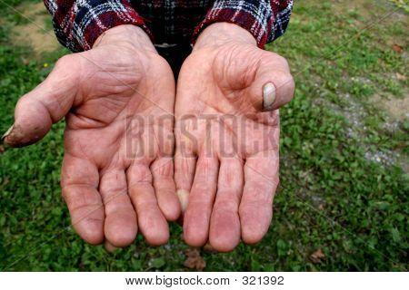 Hands Of The Shepherd