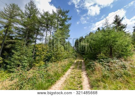 Forest and mountains landscape with hiking trail