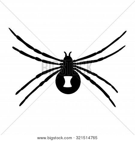 Black Widow Silhouette Isolated On White Background. Vector.