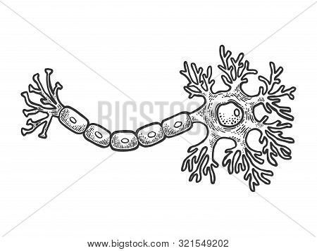 Human Neuron Nerve Cell Of Brain Schematic Vintage Sketch Engraving Vector Illustration. Tee Shirt A