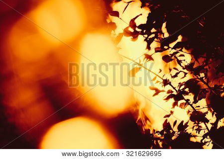 Bush On The Background Of A Strong Fire Flame. Plant On The Background Of Fire Glare. Forest Fire. S