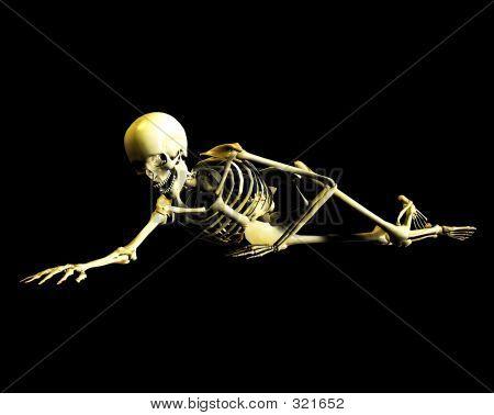 Bone 41