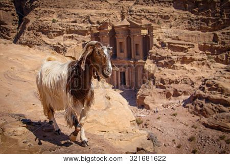 Goat On The Viewpoint Of Monastery In Petra City In Jordan