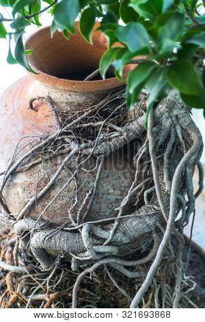 An Ancient Pitcher On The Ground Entwined With A Plant. Crock In Grass And Stones. Crock At The Gard