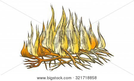 Traditional Burning Camping Fire Color Vector. Tree Branch Sticks Twigs Fire Campfire. Sprouts Of Fl
