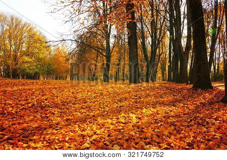 Autumn sunny landscape. Autumn park trees and fallen autumn leaves on the ground along the autumn park alley in sunny autumn October day. Selective focus at the foreground
