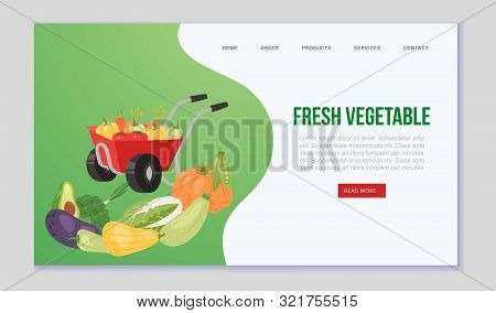 Farm Eco Vegetables And Organic Food Vector Web Template. Illustration With Hand Barrow Full Of Vege
