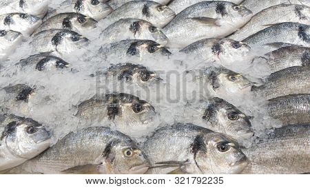 A Bunch Of Fresh Barramundi, White Perch, Silver Perch On A Bed Of Ice Sold In The Market