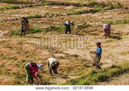 KALAW, MYANMAR - DECEMBER 06, 2016 : farmers harvesting cultivated land fields landscaped near Kalaw Shan state in Myanmar (Burma)