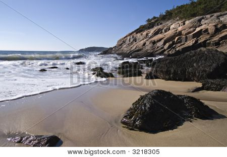 Acadia Shore