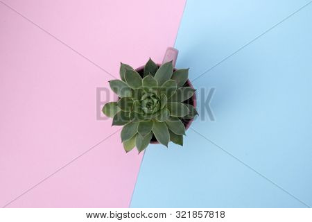 Small green plant in pot on pink and blue background