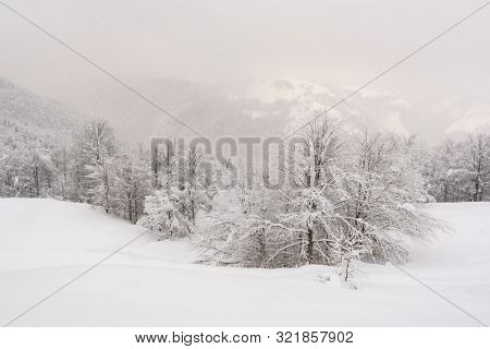 Minimalistic winter landscape in cloudy weather with snowy trees. Carpathian mountains, Landscape photography