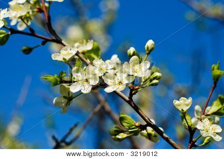 White Spring Flower